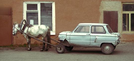 pferd-auto